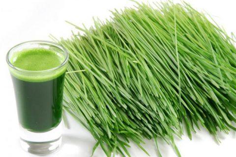 Tự làm nước ép cỏ lúa mì giải độc tố loại bỏ kim loại nặng trong cơ thể 5