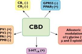 Cannabidiol là thuốc chống ung thư tiềm năng - theo thư viện Y khoa Hoa Kỳ 1