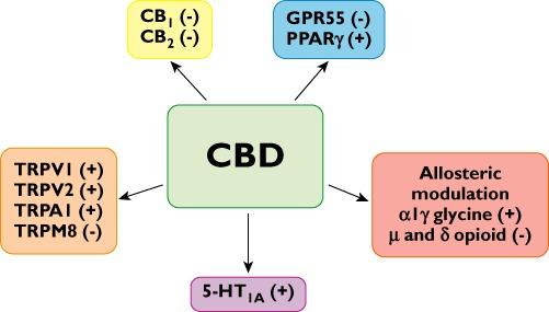 Cannabidiol là thuốc chống ung thư tiềm năng - theo thư viện Y khoa Hoa Kỳ 5