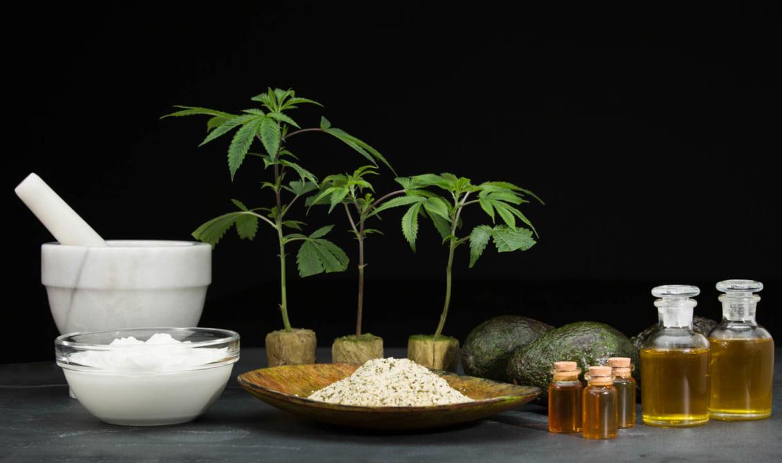 Minh chứng cho khả năng kháng viêm độc đáo của Cannabinoid trong cần sa 1