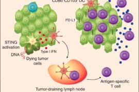 Kỷ nguyên mới cho PP chống ung thư bằng chính hệ miễn dịch 1